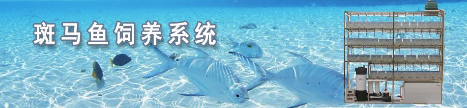 斑马鱼系统