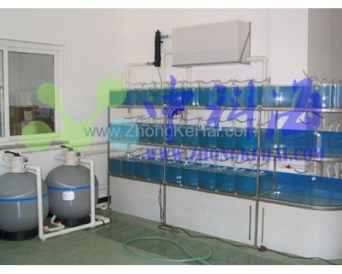 中国科学院海洋研究所-水族楼-斑马鱼系统